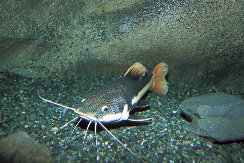 Word of the Week: Catfish